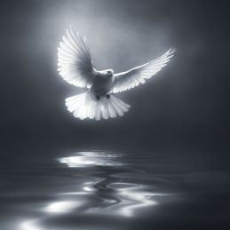 White Dove_grey